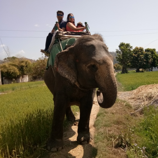 elephant-safari-corbett